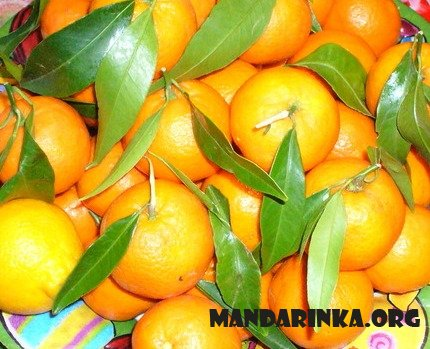 Сайт мандаринового настроения Mandarinka.org